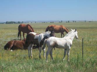 Pony Rides by ClownFreak88