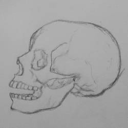 Skull drawing by Wyverntales