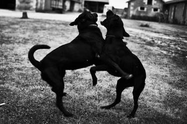 Dark dogs by RLUGASSY