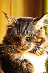 Mr. Puss by Wintertale-eu