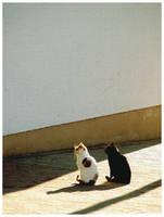 Twins by JeanFrancois