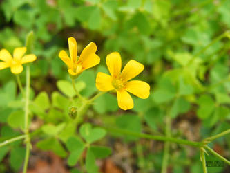 Little Yellow Flowers By Rare Patent On Deviantart