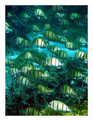 Convict Tang School 2 by heathemonte