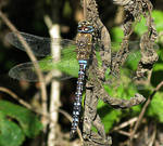Dragonfly 0721 by filmwaster