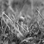 Fungi 0980 by filmwaster