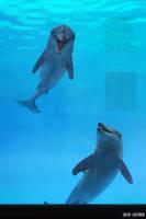 The Aquarium #8 by Julio-Lacerda