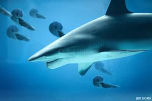 The Aquarium #10 by Julio-Lacerda