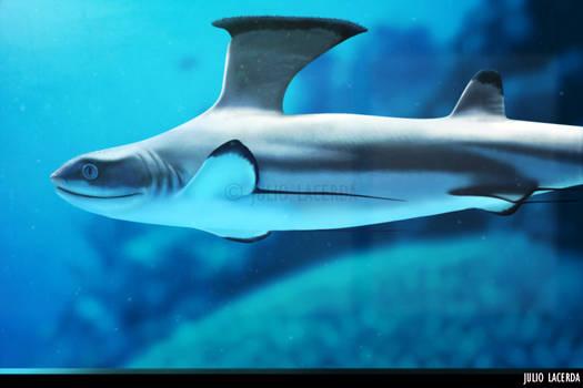 The Aquarium #11 by Julio-Lacerda