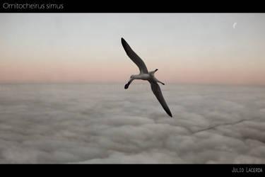 High by Julio-Lacerda