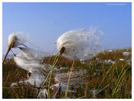 Fluffy Flower by Spe4un