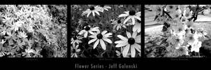 Black and White Flower Series by maverick3x6