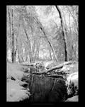 Winter Wonderland V - Reissue by maverick3x6