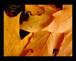 Autumn Leaves II - Reissue by maverick3x6