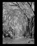 Winter Wonderland III  Reissue by maverick3x6