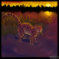 Leopardstar by stories-of-heroes