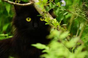 Peek-a-boo! by TheGraeSheep