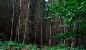 Bedgebury Forest I by EstelDreaming