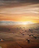 Beach sunset premade background by KalosysArt