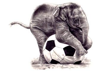 Baby Elephant by kad84
