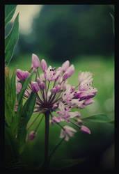 Purple by Felissauria