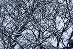 Fragile branches by 0lastnight0