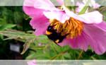 Bumblebee by KaanaMoonshadow