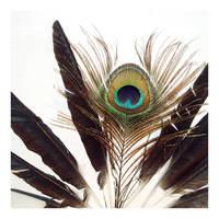 peacock by vulpescorax