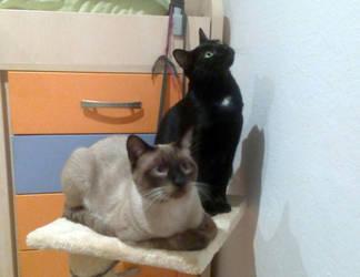 Itzal and Loki by ainhi90