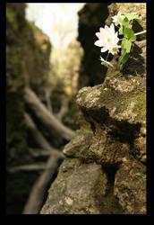 Stone by xsavior