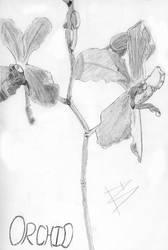 Orchid by dasu