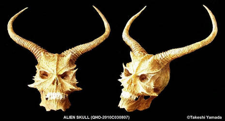 SPACE ALIEN SKULL by Dr. Takeshi Yamada by searabbit23