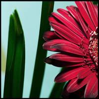 Flower by disguy2k
