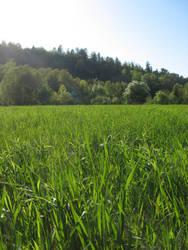 Grass Field by deadeye-stock