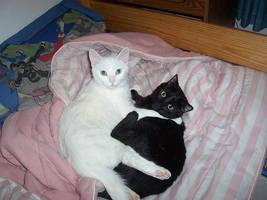 my cats by zeoranger