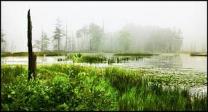 Portland Maine Bog by kimjew