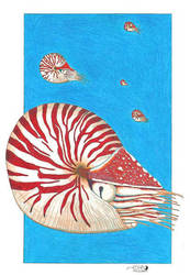 Chambered Nautilus by NocturnalSea