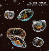 Cabinet of Curiosities: Pig Butt Worm by NocturnalSea