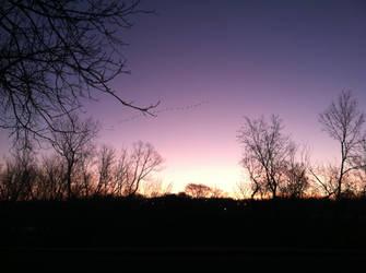Purple Sunrise by meganleigh85