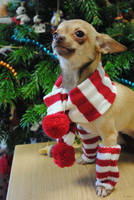 Have a Chi'rific christmas! by MessiMutt