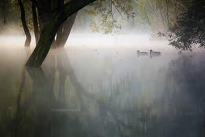 Ghosts in the Fog by DanielZrno