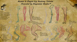 Human to Dragon Leg Anatomy Tutorial by DragonLoreStudios
