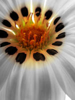 Silky White by dizzylizz