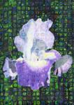 Purple Iris by magnifulouschicken