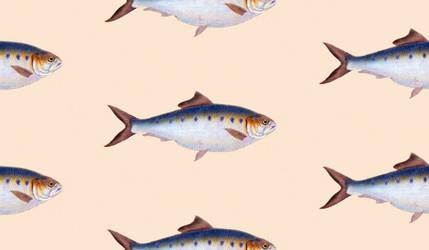 Fish pattern by Huku9H1F