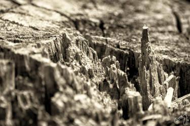 Micro-paisaje by BoHoR