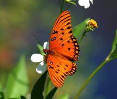 Butterfly by kaseycujo
