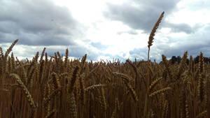 Harvest sky by Lilithaya
