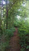 path by Lilithaya
