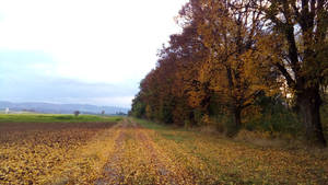 autumn by Lilithaya