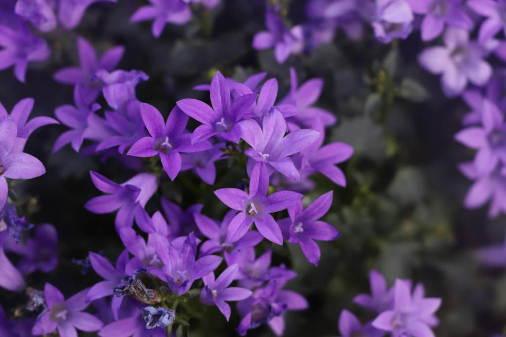 cute little purple flowers ^^ by Lilithaya